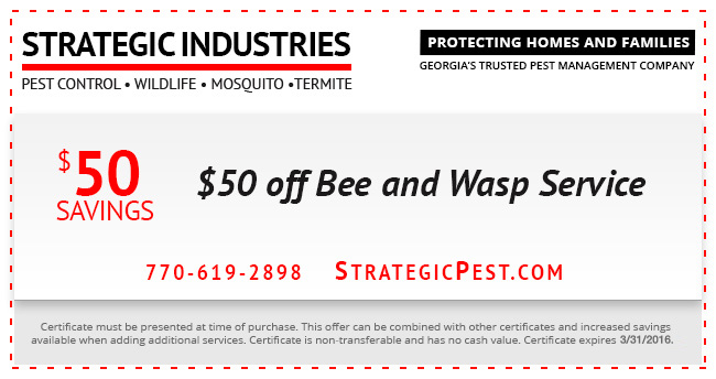 bee and wasp service